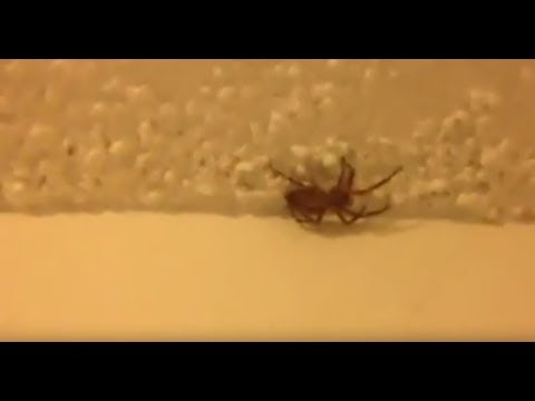 We saw a big spider in our house😱😱🙀omg!!