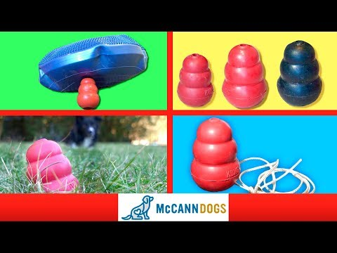 4 OTHER Ways You Can Play With Your Kong Dog Toy