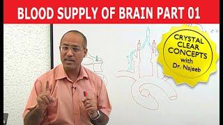 Blood Supply to Brain - Neuroanatomy - Part 1/11