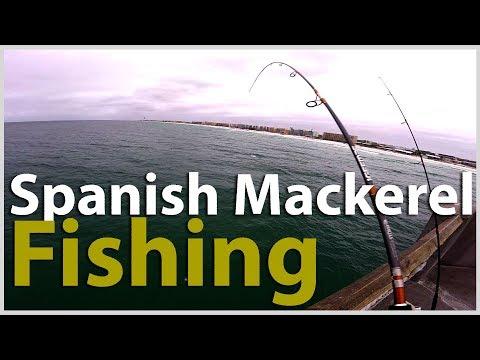 [Pier Fishing #57] Spanish Mackerel Fishing