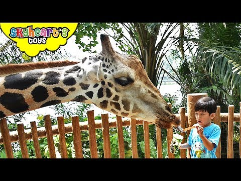 Toddler's back in Singapore Zoo Part 2 | Skyheart's safari adventure with animals jungle kids