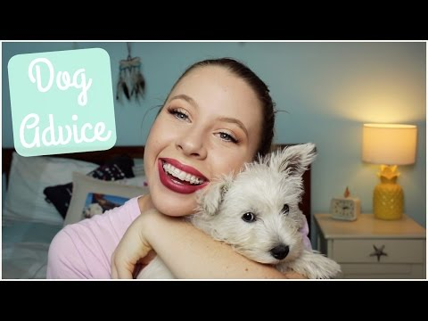 Dog Advice - Things I've Learnt | TheDogBlog
