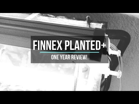 Finnex Planted+ ONE YEAR REVIEW!