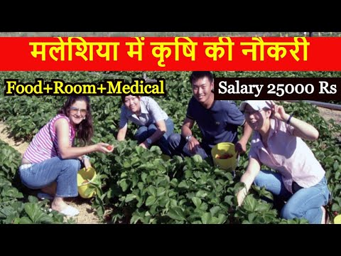 Job In Malaysia Agriculture job All Passport Salary 25000 Rs