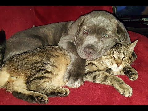 A puppy and his cat!