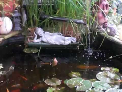 400 gallon raised pond