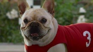 10 Funny Dog Commercials