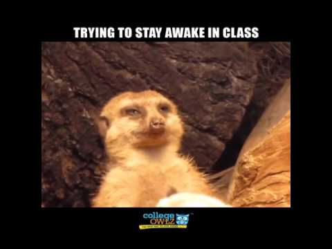 Trying To Stay Awake In Class
