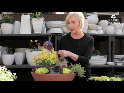 How to Create your Own Miniature Garden with Barbara