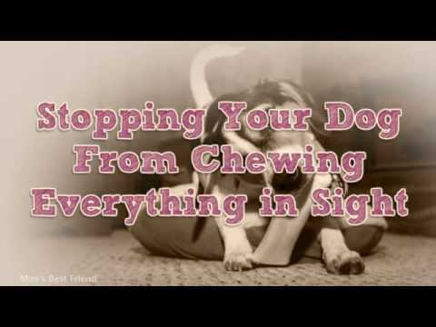Dog Training | Stopping your dog chewing everything in sight