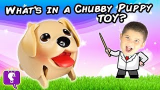 What's In a Chubby Puppy Toy? HobbyKids Science Lab