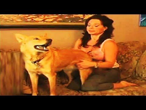 Xxx Mp4 इस औरत ने कुत्ते से कराया ऐसा काम जिसे देखकर आपके होश उड़ जायेंगे दस लाख ने देखा विडियो 3gp Sex