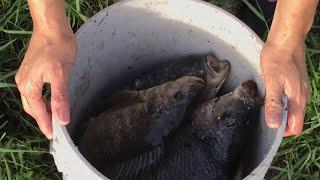 Top 5 Cast Net Fishing Big Fish!