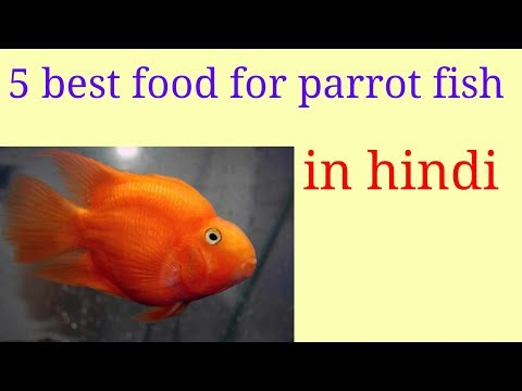 5 best food for parrot fish in Hindi,,,,