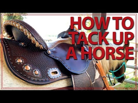 How To Saddle a Horse (Western Style)