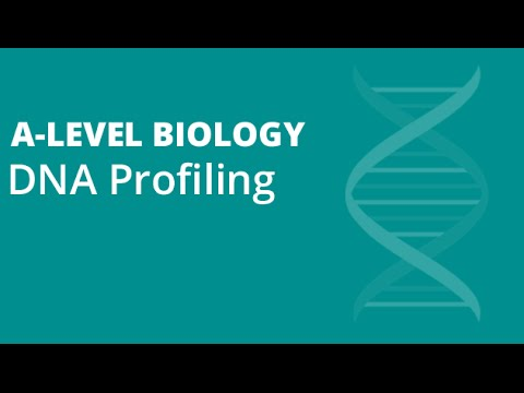 DNA Profiling/Fingerprinting | A-level Biology | OCR, AQA, Edexcel