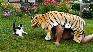 Pets Getting Scared Over Nothing - Funny Cat And Dog Videos | Pets Island