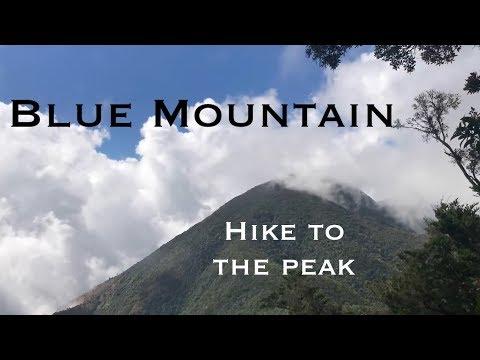 Hike up Blue Mountain, Jamaica