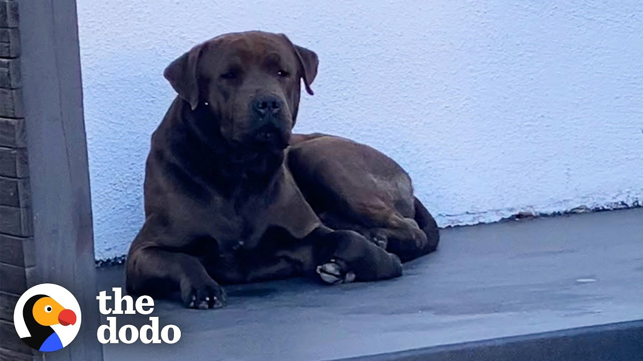 Security Camera Catches Stray Dog On Woman's Doorstep | The Dodo Foster Diaries