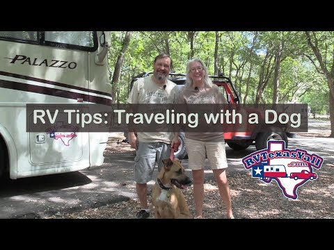 RV Tips: How to Travel with a Dog | RV Texas