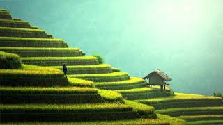 Traditional Chinese Music | Rice Fields | Beautiful Relaxing Chinese Music
