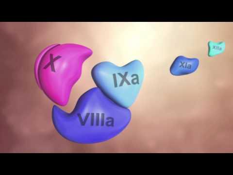 Coagulation Cascade Animation - Physiology of Hemostasis