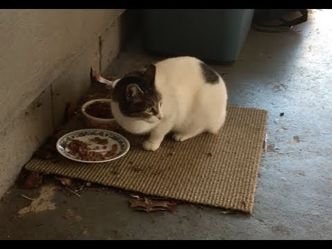 How to Help Feral and Stray Cats Survive Winter - Tips & Tricks, Resources and Information