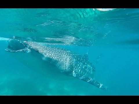 Philippines Paradise! - Whale Sharks, Turtles, Chocolate Hills, and FUN