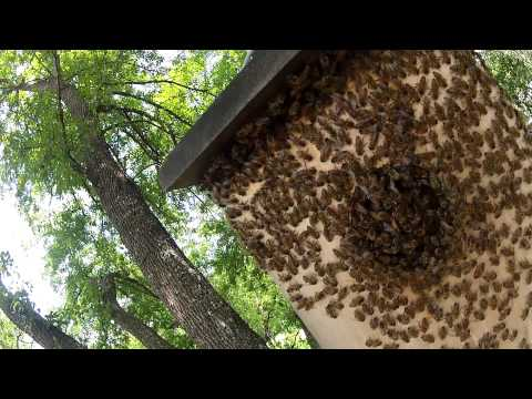 The Fort Lott Owl House Beehive