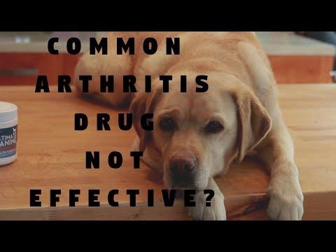 Common Dog Arthritis Drug Not Effective?
