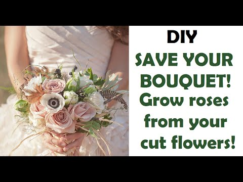 Grow Roses From Your Bouquet!