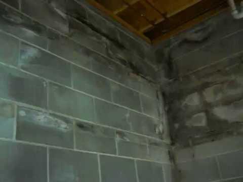 Mold in CMU corner in basement