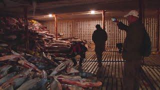 Huge hoard of frozen sharks found inside Chinese vessel
