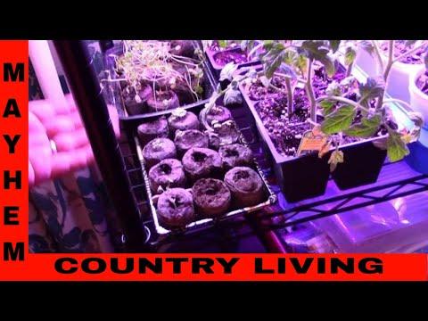 How to grow plants with grow lights