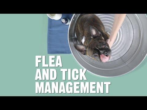 How Do I Get Rid of and Prevent Fleas and Ticks?