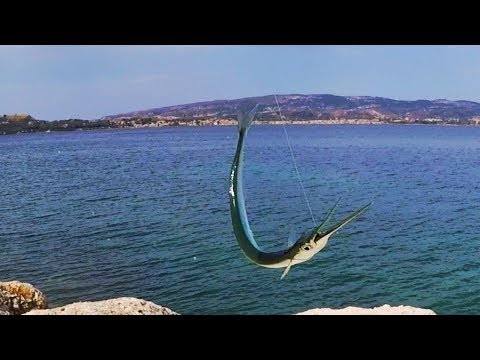 Fishing needlefish techniques & tips...Ψάρεμα ζαργάνα
