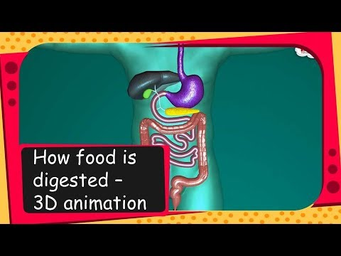 Science - How food is digested - 3D animation - English