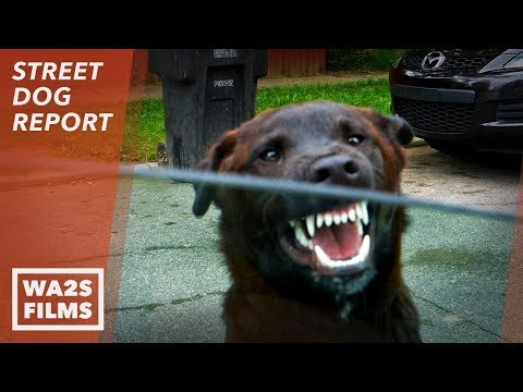 No Hope For Paws Neighbor Said He Will Shoot Stray Dog - Hope For Dogs | My DoDo