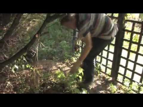 Tackling Brambles with Roundup XL Range | Video | Roundup Weedkiller
