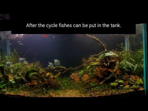 Planted aquarium using garden soil / dirt