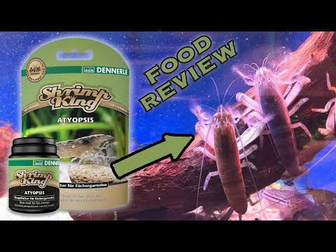 Dennerle Shrimp King Review - Atyopsis