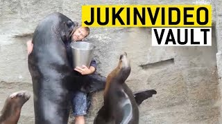 Funny Seal/Sea Lion Videos Compilation|| JukinVideo Vault