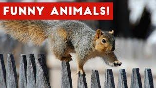 Funny Pet Videos