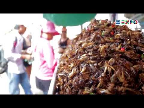 Would you eat insects?