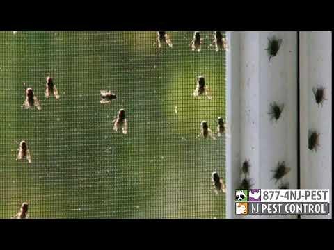 Cluster Flies in the winter!?