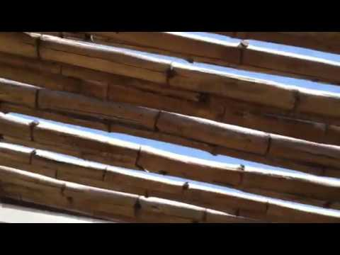 Bamboo patio cover with wood boring beetle evidence