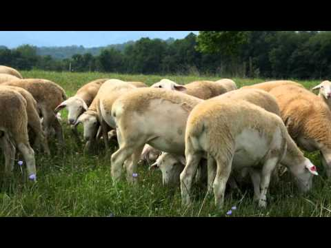 Pasture Management and Meat Quality HD