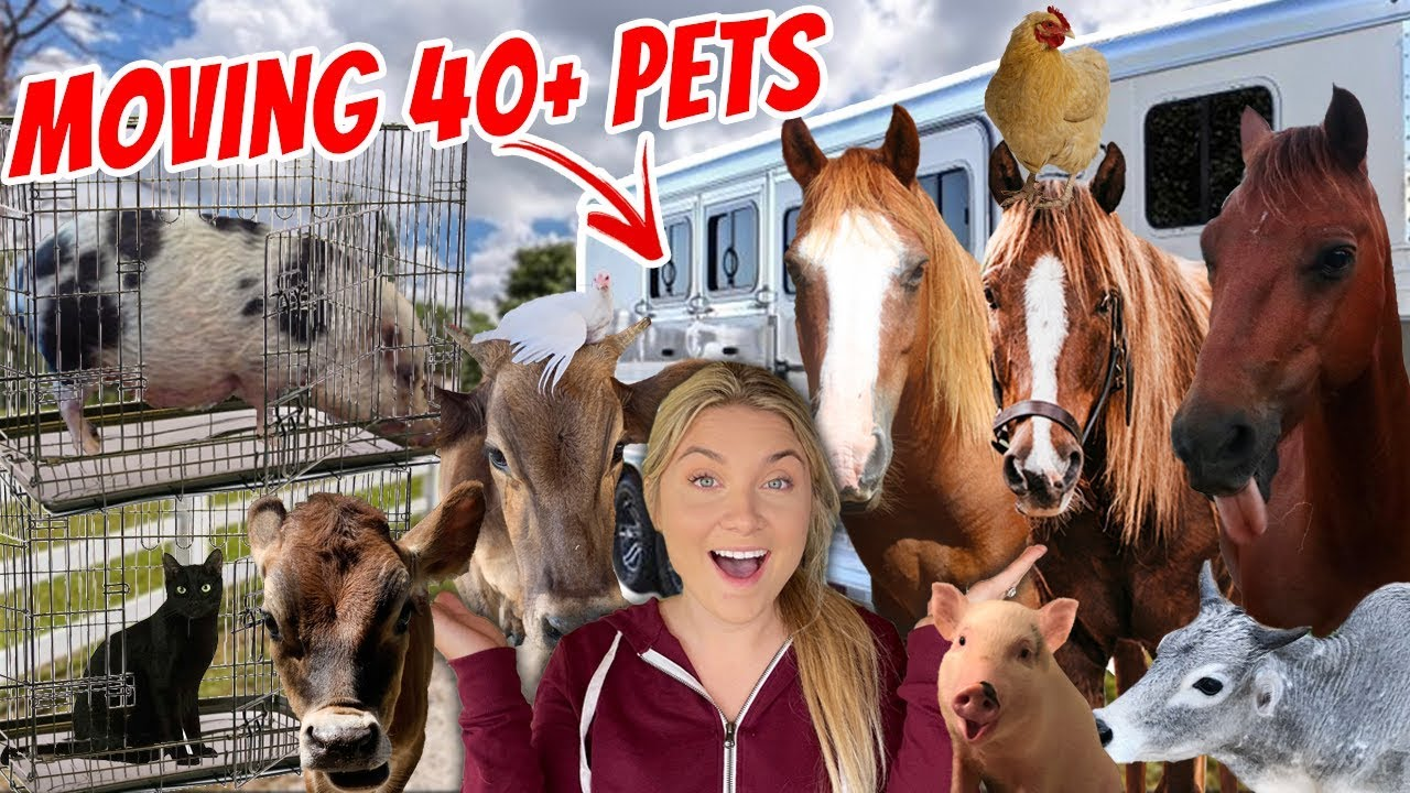 Moving ALL MY PETS to the new FARM | 40+ PETS!