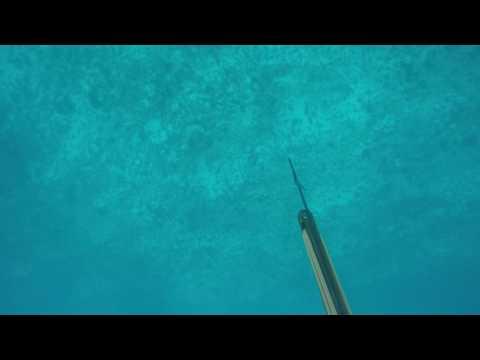 Spearfishing shark Attack Australia