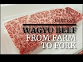 Download  MEAT IN JAPAN⎜PART 2/3⎜WAGYU BEEF⎜FROM FARM TO FORK⎜TOKYO MP3,3GP,MP4